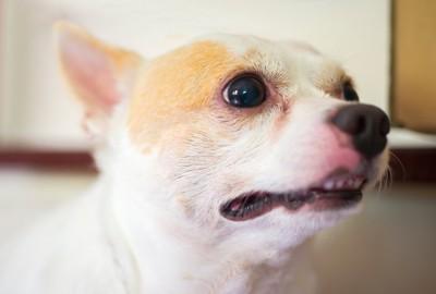 少し口を開けた犬の顔アップ