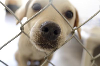 フェンスから鼻を出す犬