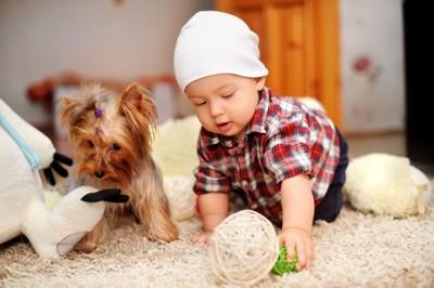 遊んでいる赤ちゃんと犬