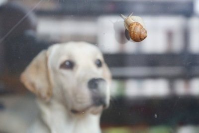 カタツムリを見つめる犬