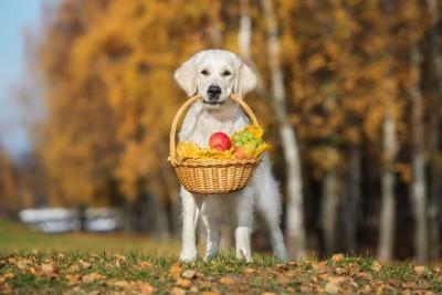 フルーツバスケットをくわえる犬