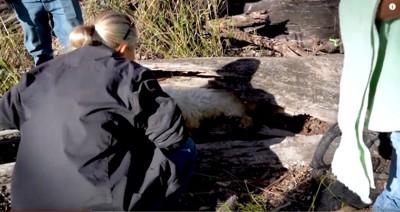 枯木の中の犬を出そうとする女性