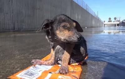 水路に打ち捨てられた子犬