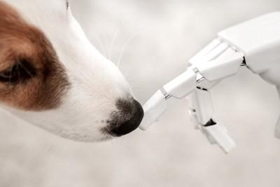 ロボットの手の匂いを嗅ぐ犬