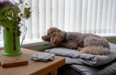 窓の外を覗く犬