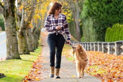 散歩中にアイコンタクトを取る女性と犬