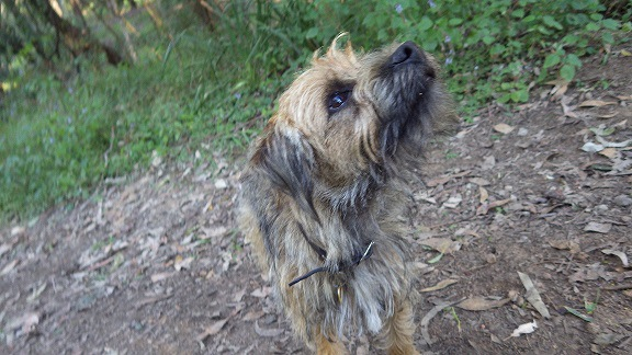 山道を散歩中の犬