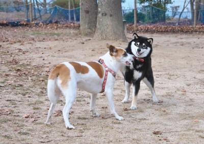 犬2匹の挨拶