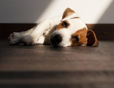 下痢やおう吐で震える犬