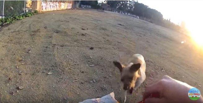 咬む素振りを見せる犬