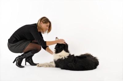 犬をなでる女性