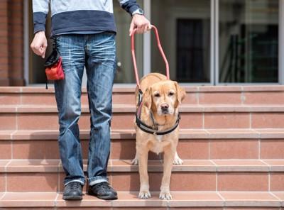 飼い主と階段を下りる犬