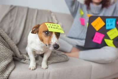 ソファーで頭にメモを貼り付けた犬