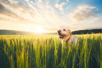 光に当たる犬