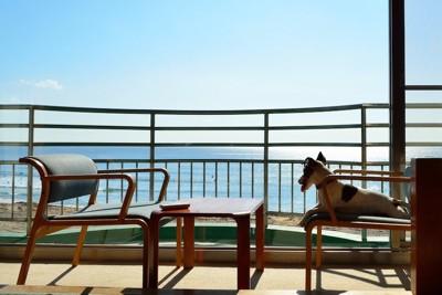 海辺のホテルの椅子に座っている犬