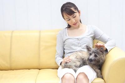 膝の上に乗った犬を撫でる女性
