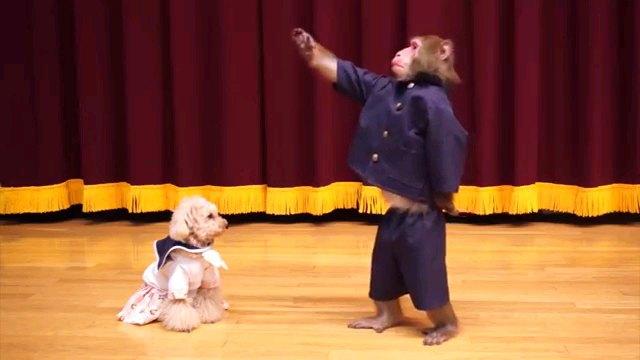 手をあげる猿