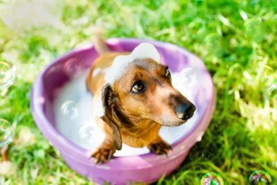 泡が頭に乗った犬
