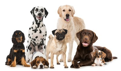 色んな犬種の犬たち