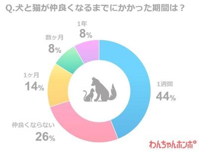 犬と猫の同居に関するアンケート調査