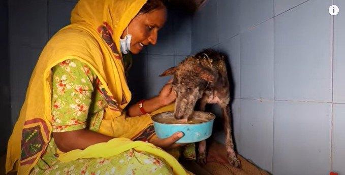 流動食を食べる犬