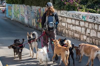 5匹の犬の散歩風景