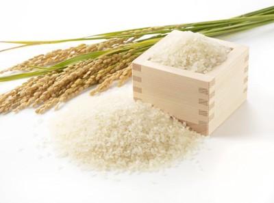 お米と稲と枡