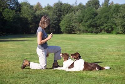 飼い主の前で伏せをしている二匹の犬