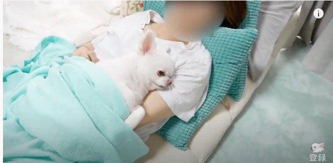ママの布団に潜りこんで昼寝する犬