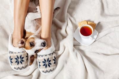 飼い主の足元で寝転ぶ犬