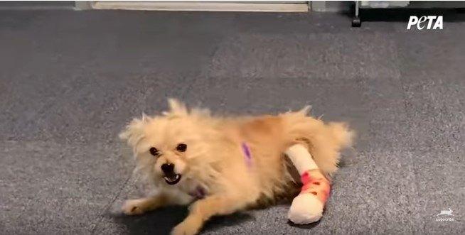 床で暴れる犬