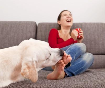 足を舐める犬