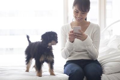 スマホをいじる女性をそばで見つめる犬