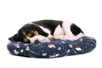 眠るビーグル犬
