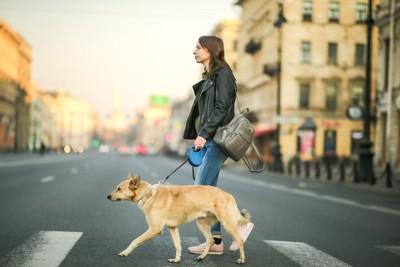 都市の街の中を散歩する犬と女性