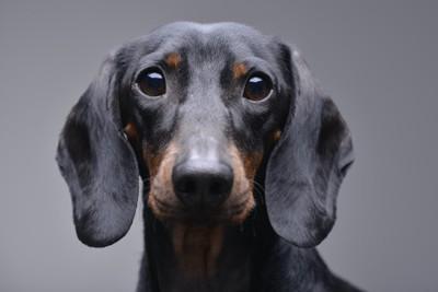寂しそうな顔で見つめる犬