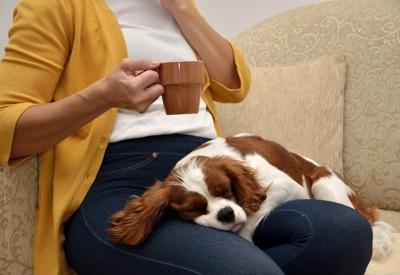 女性の膝の上で眠る犬