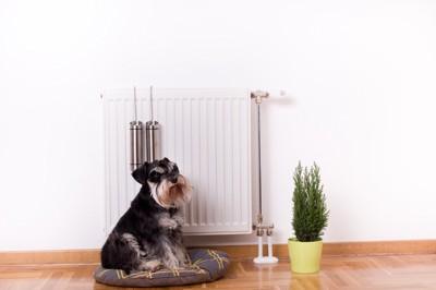 電気ヒーターの前に座る犬