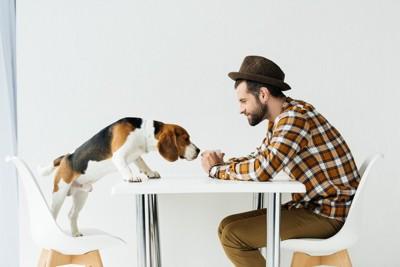 男性の手の中の匂いを嗅ぐ犬