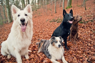 落ち葉と4頭の犬