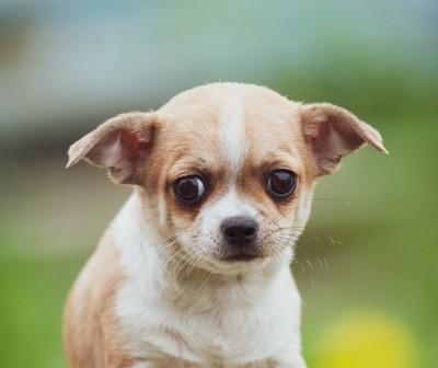 目を逸らす犬