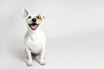 座ってこちらを見つめながら笑顔な犬