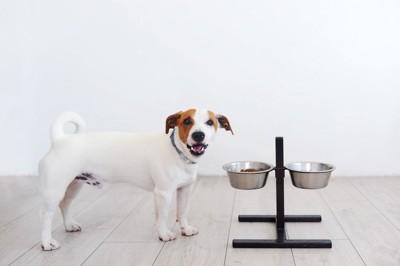 お皿を乗せるための犬のグッズ、ジャックラッセルテリ