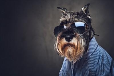 サングラスをかけてシャツを着ている犬