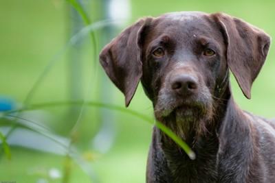 草むらの中にいる犬