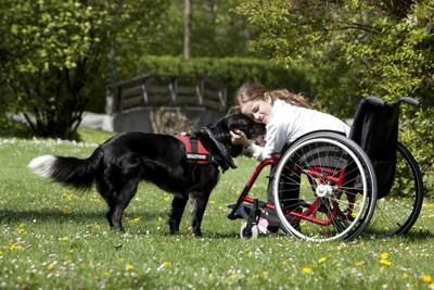 車椅子に乗る女の子と介助犬