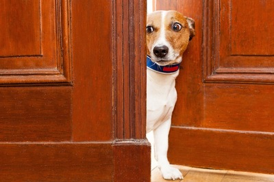 ドアから顔を出してのぞく犬
