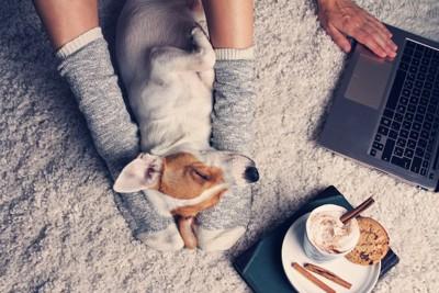 パソコンを操作する飼い主の足元で眠る犬
