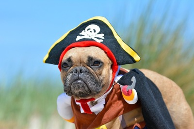 コスチュームを着させられて嫌そうな表情の犬
