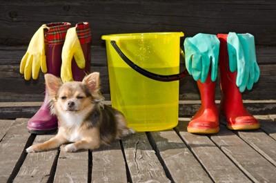 掃除道具と犬